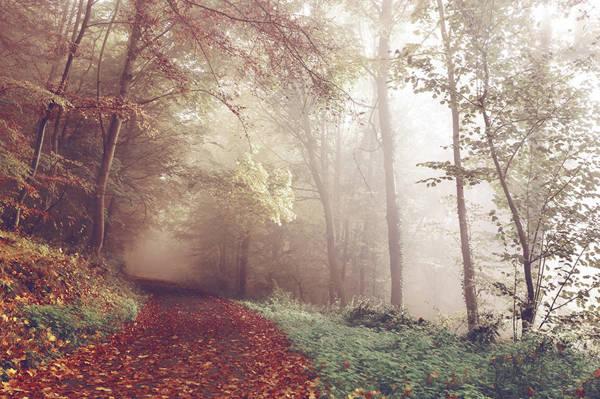 Las w czerwieni